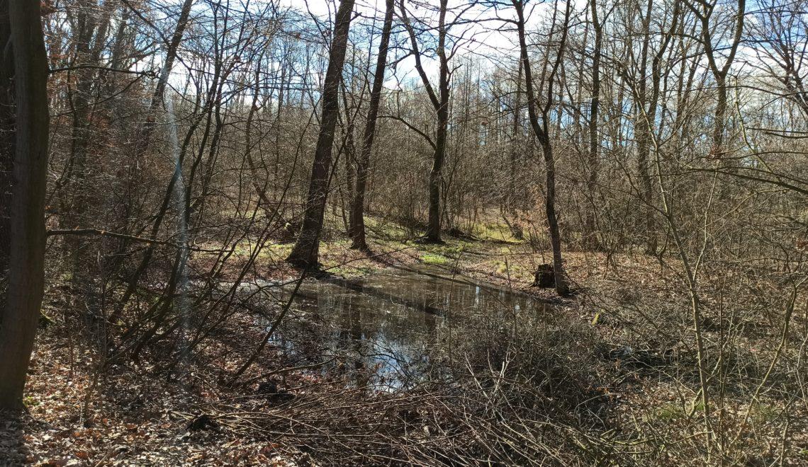 Czym jest edukacja przyrodniczo – leśna?